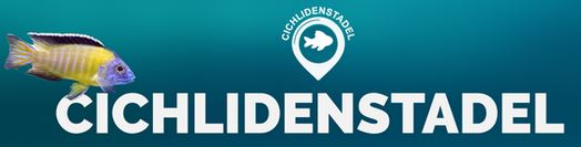 Cichliden-Stadel.de