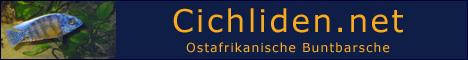 Cichliden Net