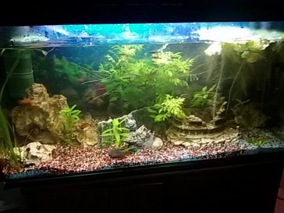 mein 120l Aquarium