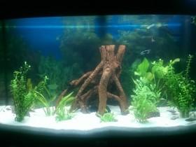 Unser 180 l Aquarium