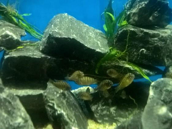 Jungfische II