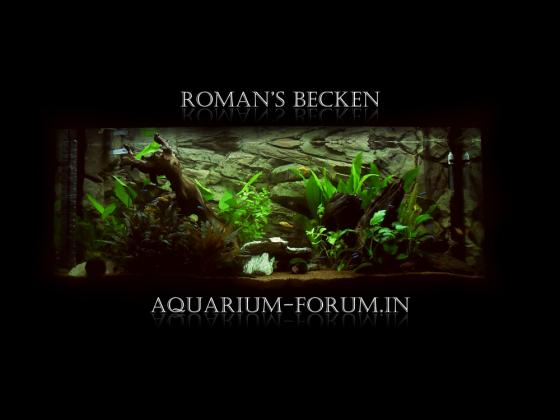 Aquarium-Forum.in