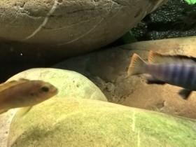 Männchen und Weibchen einenTag nach dem einsetzten