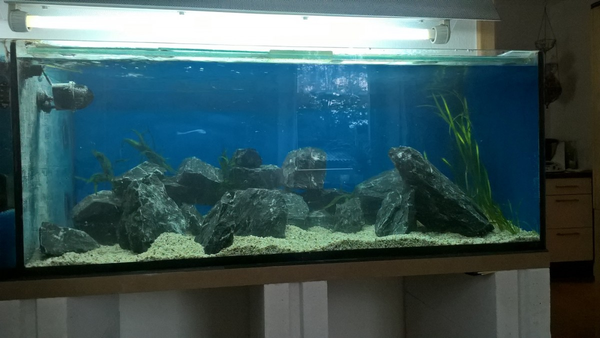 Aquarium neu